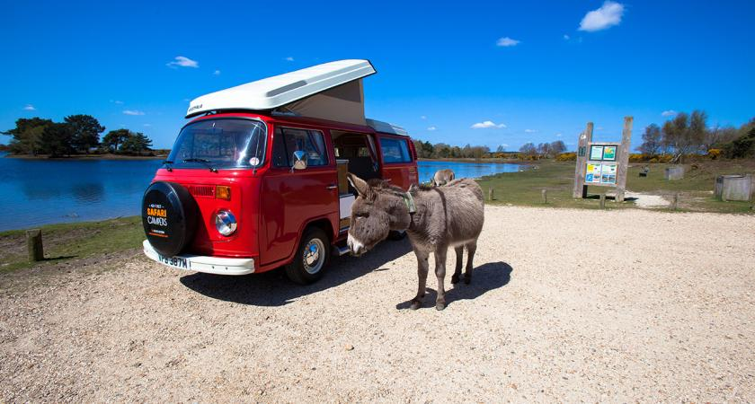 Berry VW camper van and donkey on riverbank